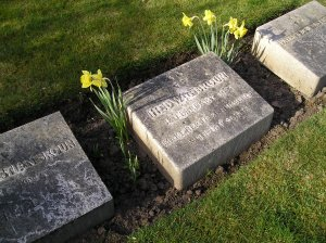 Grave stones with daffodils